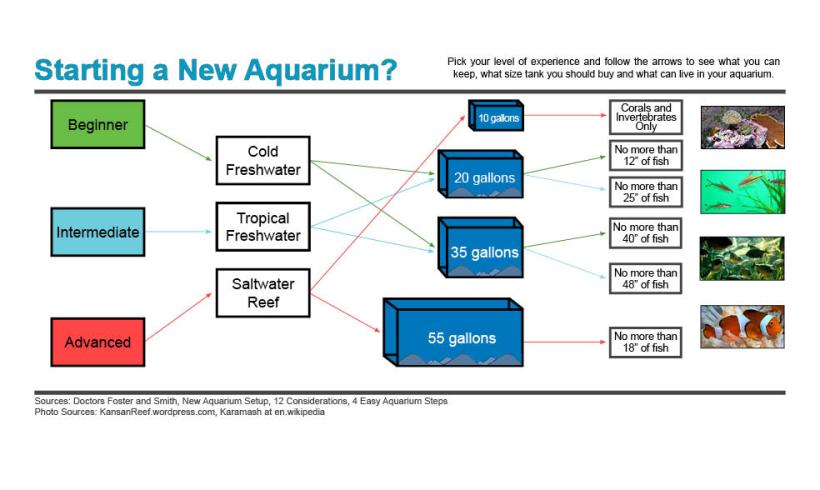 Starting_a_New_Aquarium